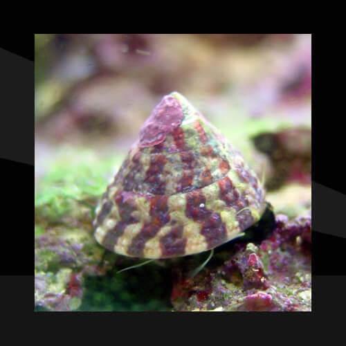 Los Gasteropodos (Caracoles)